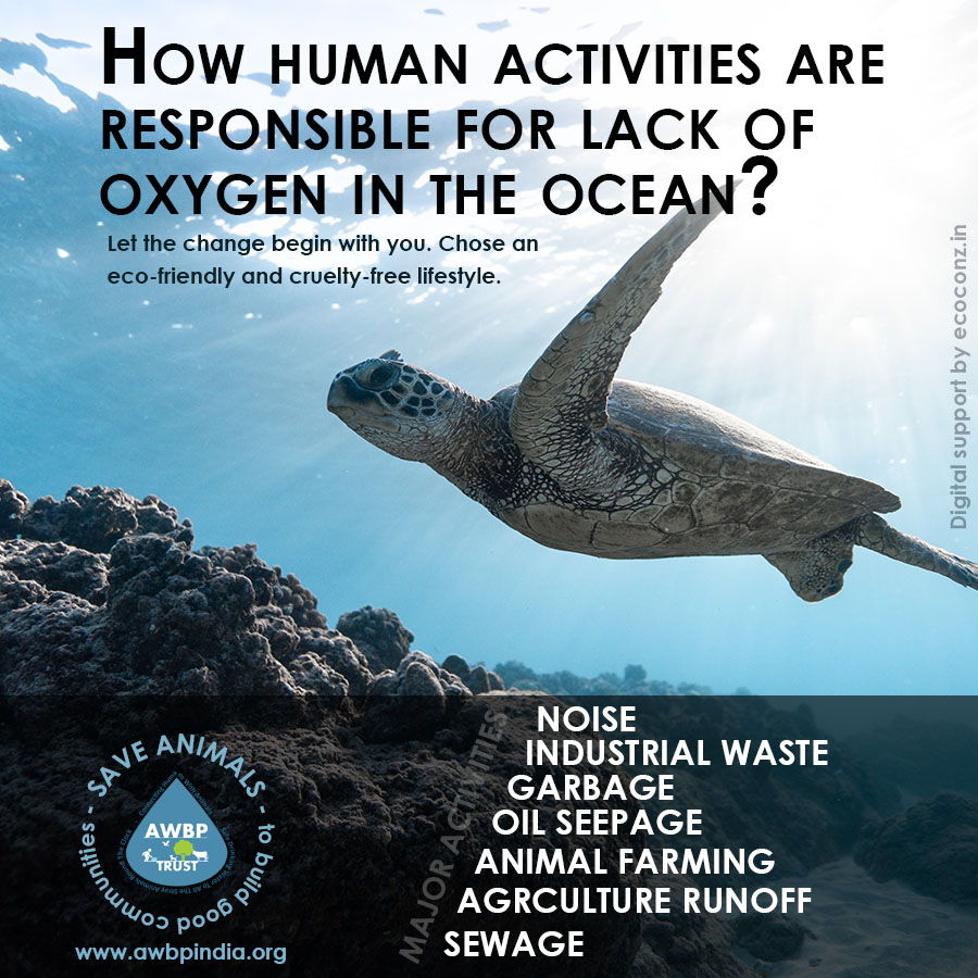 How Human Activities Are Responsible For Lack of Oxygen In the Ocean?