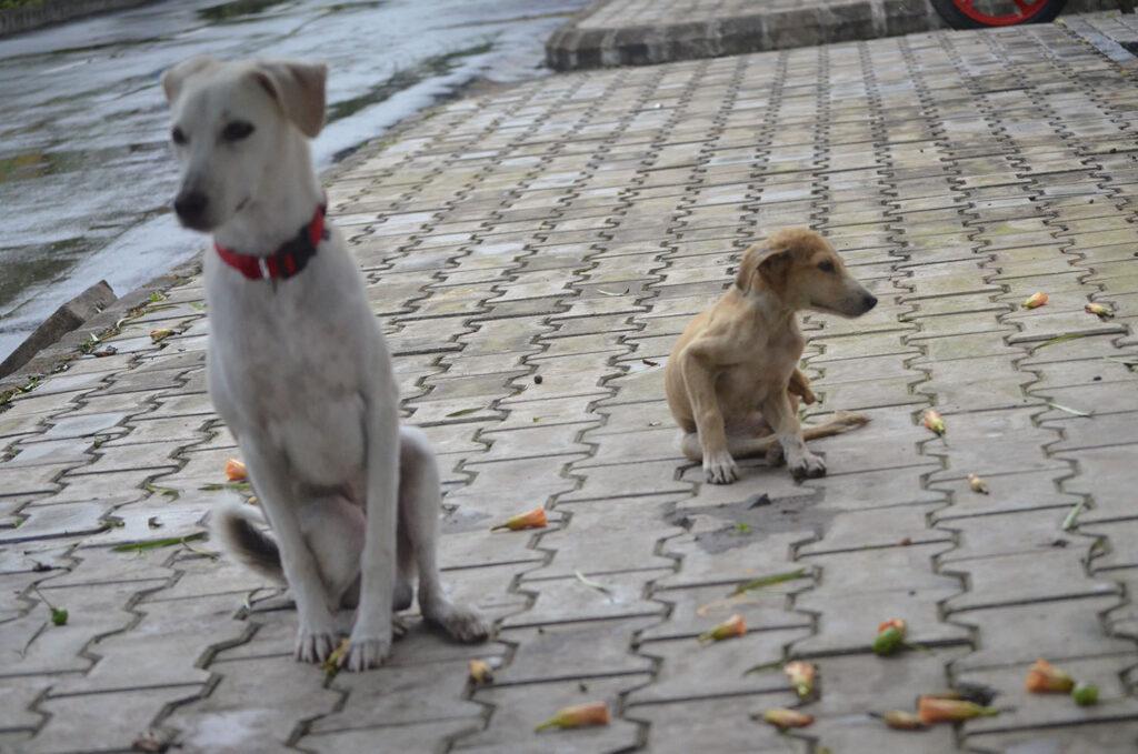 raju pet dog awbp trust