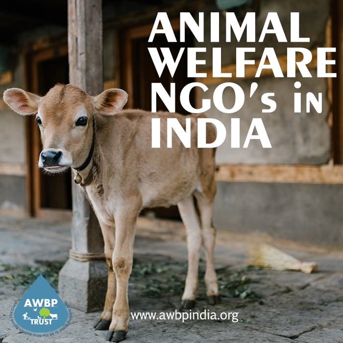 NGOs In India, Working For Animal Welfare And Rights