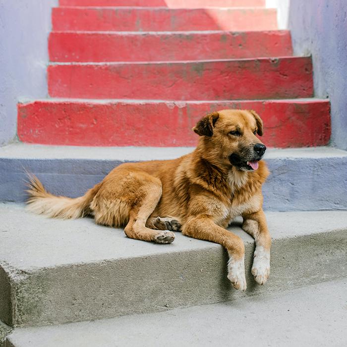 awbp trust article street dog
